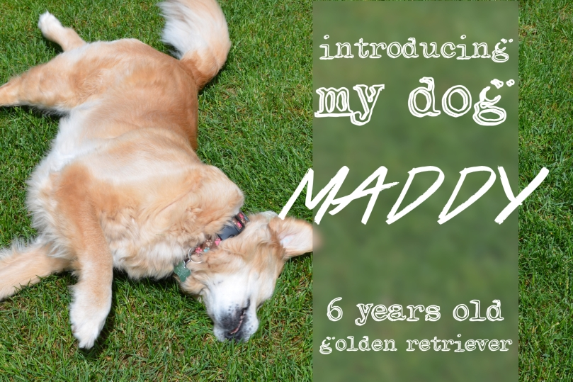 introducing maddy icon