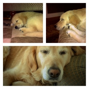 My sweet sleepy puppy over the years.